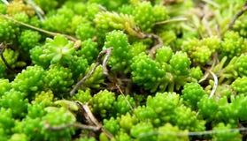 Piccole piante Fotografia Stock Libera da Diritti