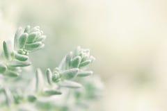 Piccole piante Immagine Stock Libera da Diritti
