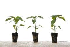 Piccole piante fotografia stock