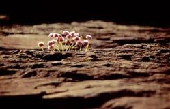 Piccole piante fra le rocce alla linea costiera Fotografia Stock Libera da Diritti