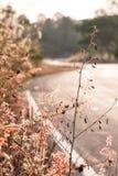 Piccole piante lungo il sideway Fotografie Stock