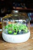 Piccole piante nel vetro, decorazione del fondo Fotografie Stock