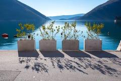 Piccole piante urbane su un fondo della montagna del mare Immagine Stock