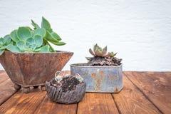 Piccole piante in vasi da fiori arrugginiti Fotografia Stock