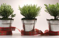Piccole piante verdi Fotografie Stock Libere da Diritti