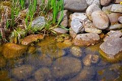 Piccole rane sull'isola di Reichenau sul lago di Costanza fotografie stock libere da diritti