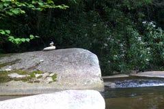 Piccole rocce accatastate su un masso vicino ad una corrente Immagini Stock