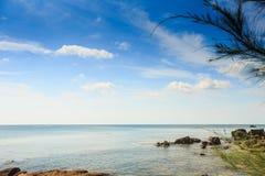 Piccole rocce in acqua dal ramo di albero lanuginoso della costa a priorità alta Fotografia Stock
