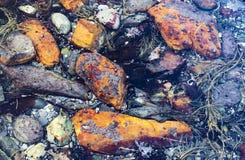 Piccole rocce sulla spiaggia Immagini Stock