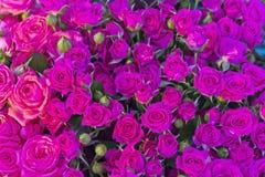 Piccole rose rosa nel mercato Fotografie Stock