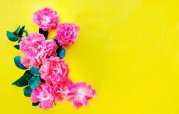 Piccole rose su giallo luminoso Fotografia Stock Libera da Diritti