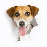 Piccole rotture del cane attraverso l'insegna immagine stock libera da diritti