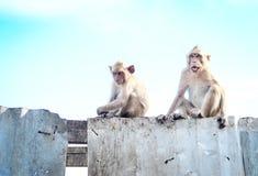 Piccole scimmie che aspettano freing Immagine Stock Libera da Diritti