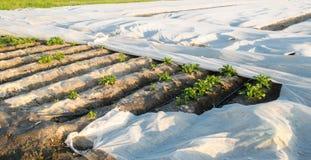 Piccole serre Crescita di verdure Spunbond per proteggere da gelo e per tenere umidit? delle verdure Terreni agricoli immagini stock