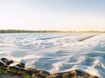 Piccole serre Crescita di verdure Spunbond per proteggere da gelo e per tenere umidit? delle verdure Terreni agricoli immagini stock libere da diritti