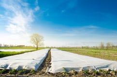 Piccole serre Crescita di verdure Spunbond per proteggere da gelo e per tenere umidit? delle verdure Terreni agricoli fotografia stock libera da diritti