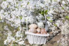 Piccole uova di Pasqua beige in un canestro che appende sui rami di un ciliegio di fioritura Immagini Stock