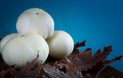 Piccole zucca e foglie bianche Fotografie Stock Libere da Diritti