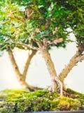 Piccoli alberi immagine stock