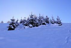 Piccoli alberi attillati nell'orario invernale Fotografia Stock Libera da Diritti