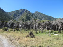 Piccoli alberi e pascoli con il contesto della montagna Immagine Stock Libera da Diritti