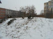 Piccoli alberi su una collina nevosa Immagini Stock