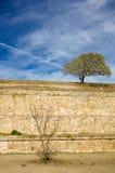 Piccoli albero e cespuglio di Monte Alban Oaxaca sui pendii di antico Fotografia Stock