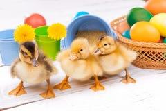 Piccoli anatroccoli con le uova di Pasqua Fotografie Stock