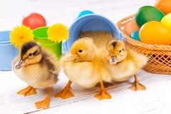Piccoli anatroccoli con le uova di Pasqua Immagine Stock Libera da Diritti