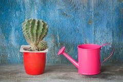 Piccoli annaffiatoio e cactus rosa Priorità bassa blu dell'annata Immagine Stock