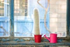 Piccoli annaffiatoio e cactus rosa sulla vecchia finestra Immagini Stock
