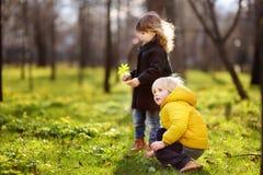 Piccoli bambini svegli che giocano insieme nel parco soleggiato della molla Immagini Stock