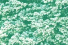 Piccoli brunch attillati verdi con il breve fondo degli aghi fotografie stock libere da diritti