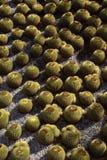 Piccoli cactus sulla terra immagine stock