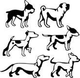Piccoli cagnolini Fotografia Stock Libera da Diritti
