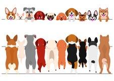 Piccoli cani diritti anteriori ed insieme posteriore del confine illustrazione di stock