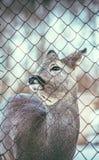 Piccoli cervi del bambino all'aperto Fotografia Stock Libera da Diritti