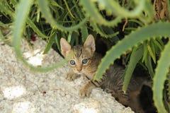 Piccoli clibms del gattino su Fotografie Stock Libere da Diritti