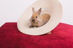 Piccoli conigli decorativi svegli Fotografia Stock
