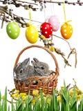 Piccoli conigli del bambino Immagine Stock Libera da Diritti