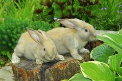 Piccoli conigli sul ceppo Immagini Stock Libere da Diritti