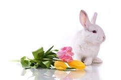 Piccoli coniglio e fiori immagine stock libera da diritti