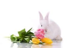 Piccoli coniglio e fiori immagini stock libere da diritti