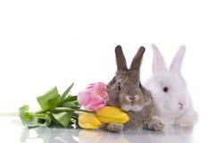 Piccoli coniglio e fiori fotografia stock