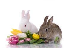Piccoli coniglio e fiori fotografie stock