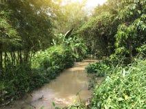 Piccoli corsi d'acqua nella campagna immagini stock libere da diritti