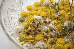 Piccoli crisantemi Immagine Stock Libera da Diritti