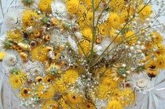 Piccoli crisantemi Immagine Stock
