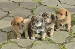 Piccoli cuccioli 3 Fotografia Stock