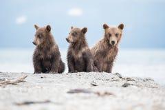 Piccoli cuccioli che aspettano il suo orso della madre Fotografie Stock Libere da Diritti